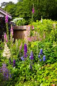 stock photo of english cottage garden  - Cottage Garden with beautiful vibrant flowers Berkshire UK - JPG