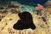 foto of snail-shell  - Underwater snail shell - JPG