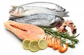 image of catching fish  - Fresh catch of fish and other seafood isolated on white - JPG