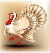 stock photo of turkey-cock  - Vector illustration of turkey cock - JPG