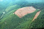 stock photo of mudslide  - Patches of logging activity dot the Douglas Fir forests of western Washington state. ** Note: Soft Focus at 100%, best at smaller sizes - JPG