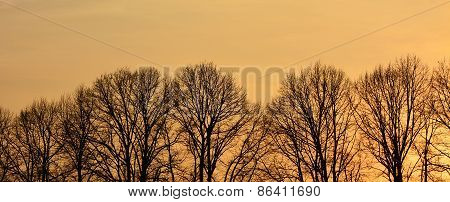 Line Of Naked Trees At The Sunset. Background
