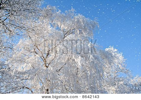 Snowfall And Tree