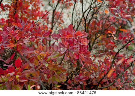 Nice Forest In A Autumn