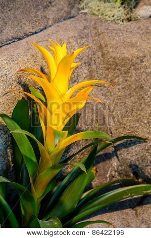 Yellow Orchid Over Rocks