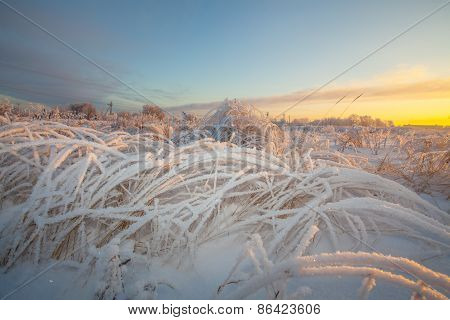 Winter frosty grass at sunrise