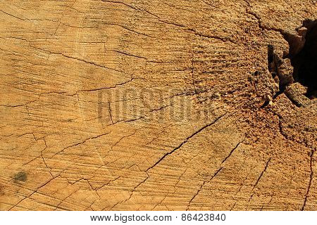 background and texture of the stump