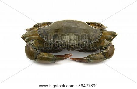 crab isolated on white background sea food