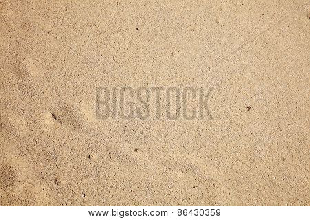 Background of wet beach sand