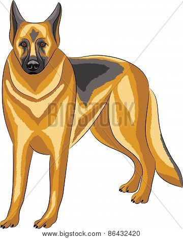 Vector. German Shepherd.