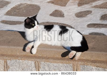 Greek Cats - Beautiful Black And White Domestic Cat Lies On The Curb. Greece. Mykonos.