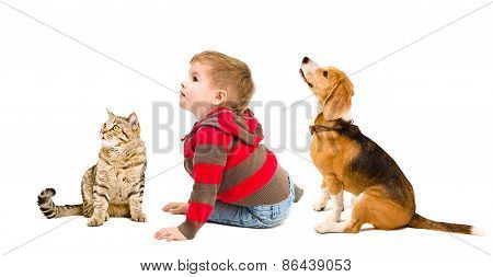 Cute boy, beagle dog and cat Scottish Straight