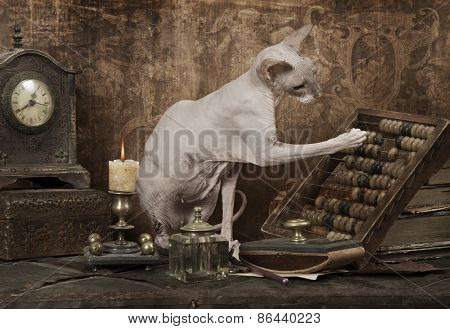 Don Sphinx Cat Use An Abacus