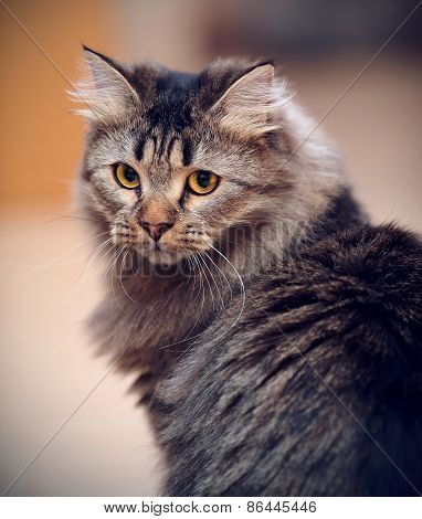 Portrait Of A Striped Domestic Cat.