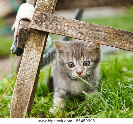 littele  cat  on garden