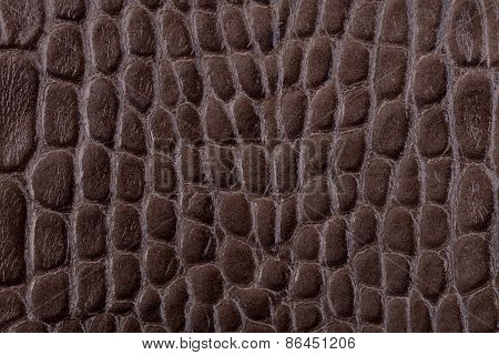 Brown Alligator Leather Close Up