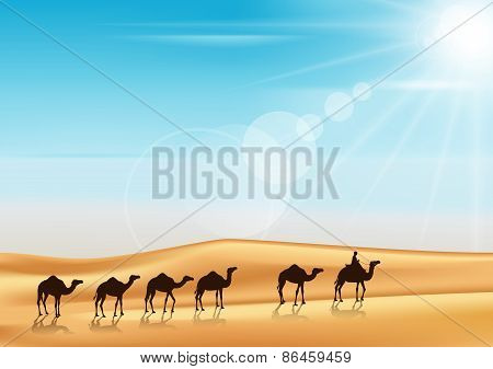 Group of Camels Caravan Riding