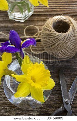 easter daffodil