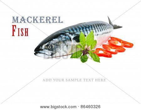 Fresh  Mackerel Fish Decorated With Pepper And Basil