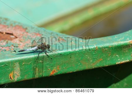 Dragonfly On Boat