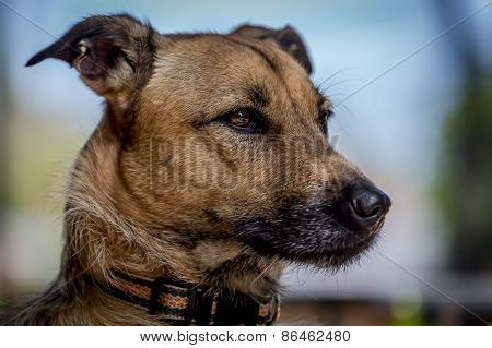 Right Profile of Dog
