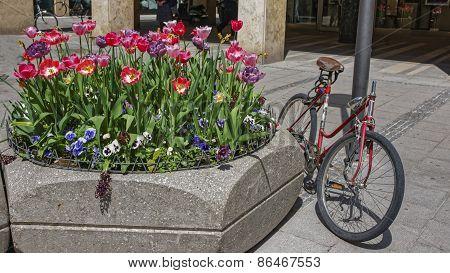 Abandoned Bike Parked Near Street Flowerbed