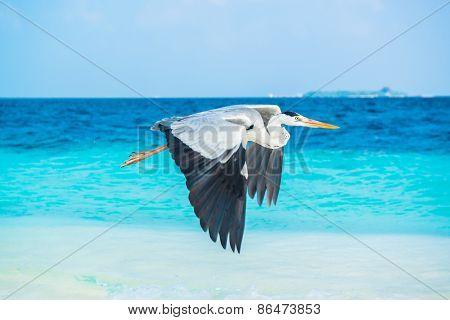 Bird is on the morning beach, Maldives
