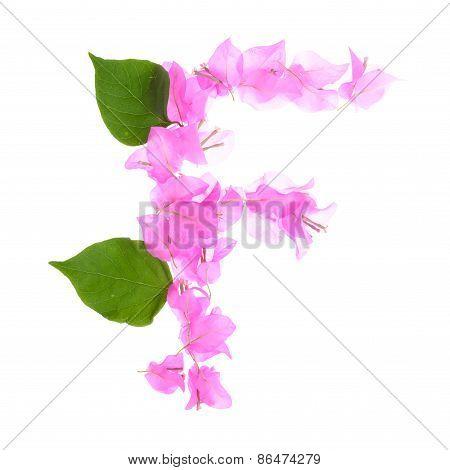Bougainvillea Flowers Alphabet Isolated On White Background