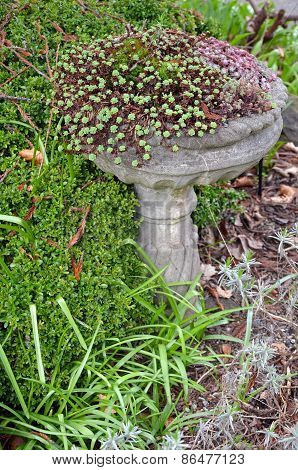 Ornamental Stone Birdbath With Plants
