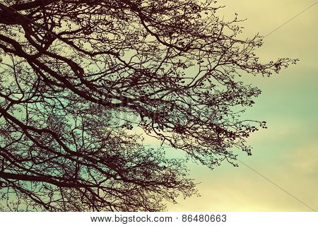 Bare Tree Branches Over Cloudy Sky Background