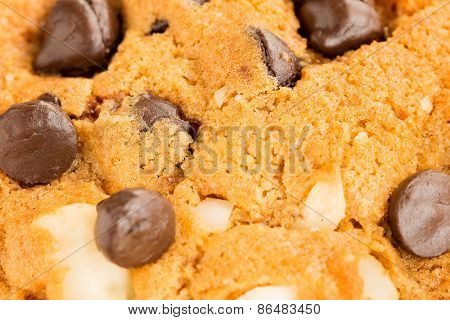 Chocolate Chip  And Nuts Cookie, Extreme Close Up , Selective Focus