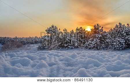 Winter Sunset On A Background Of Snow Forest