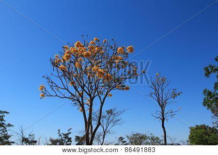 Brazilian Savannah Flower