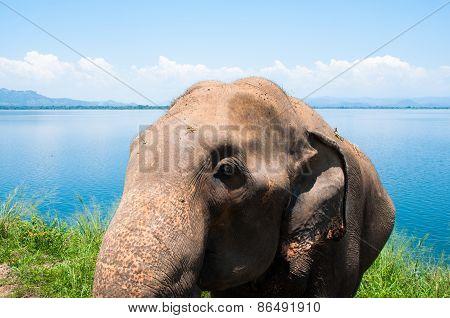 Eephant face