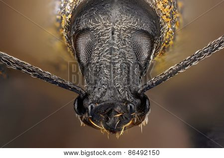 Extreme sharp and detailed study of weevil taken with microscope objective stacked from many shots