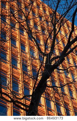 Office Block And Tree