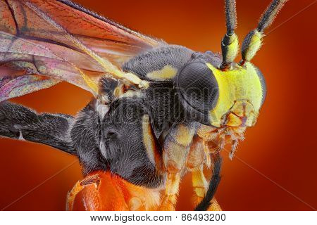 Extreme sharp and detailed macro portrait of small wasp taken with microscope objective