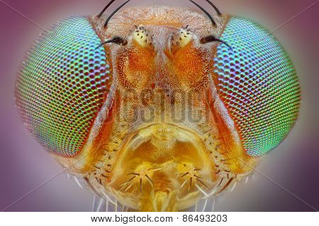 Extreme sharp macro portrait of small fly head taken with 25x microscope objective
