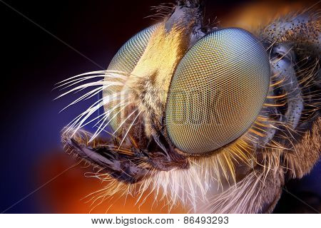Extreme sharp and detailed view of Robber fly head taken with microscope objective