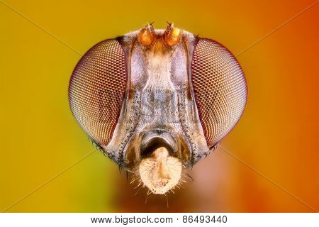 Extreme sharp and detailed study of 3 mm fly head taken with microscope objective