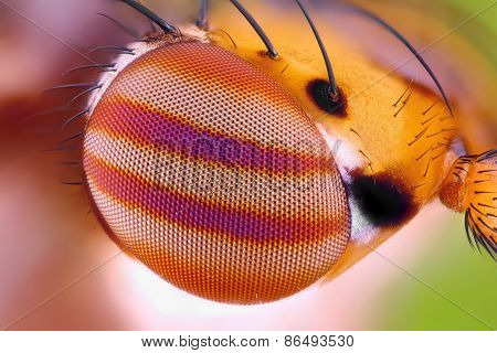 Macro fly compound eye surface at extreme magnification. Very sharp