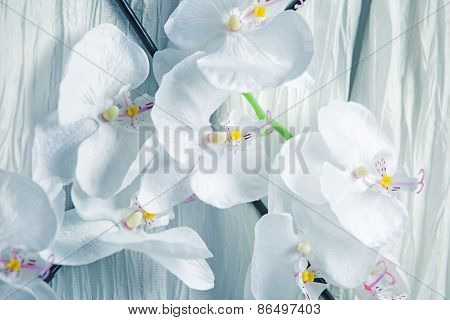 Amazingly Delicate White Orchid