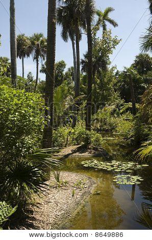Florida Landscape
