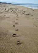 picture of footprints sand  - Footprints in Sand Monterey Bay California Beach - JPG