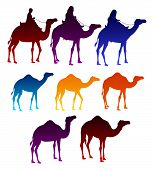 pic of camel  - Set of Colorful Camels and Arab Men Riding in Camels Elements Isolated i White Background - JPG