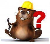 foto of beaver  - Fun beaver - JPG