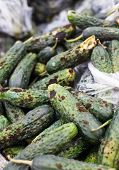 foto of landfills  - Piles of rotten cucumbers on the landfill - JPG