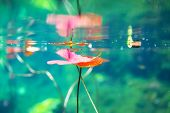 stock photo of cenote  - Mexican cenote underwater - JPG