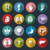 picture of flat stomach  - Set of vector Medical Icons with human organs in flat style with long shadows - JPG