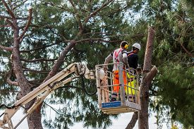 pic of cutting trees  - professional lumberjack cuts trunks on the top of a big tree with a chainsaw - JPG
